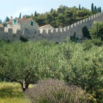 Lavender, olives, wine, local crops and ancient city wall Hvar City