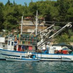 Seiners in Milna, just like ours in Pacific N.W.