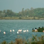 with a bunch of Cormorants along the road to Gau du Roi